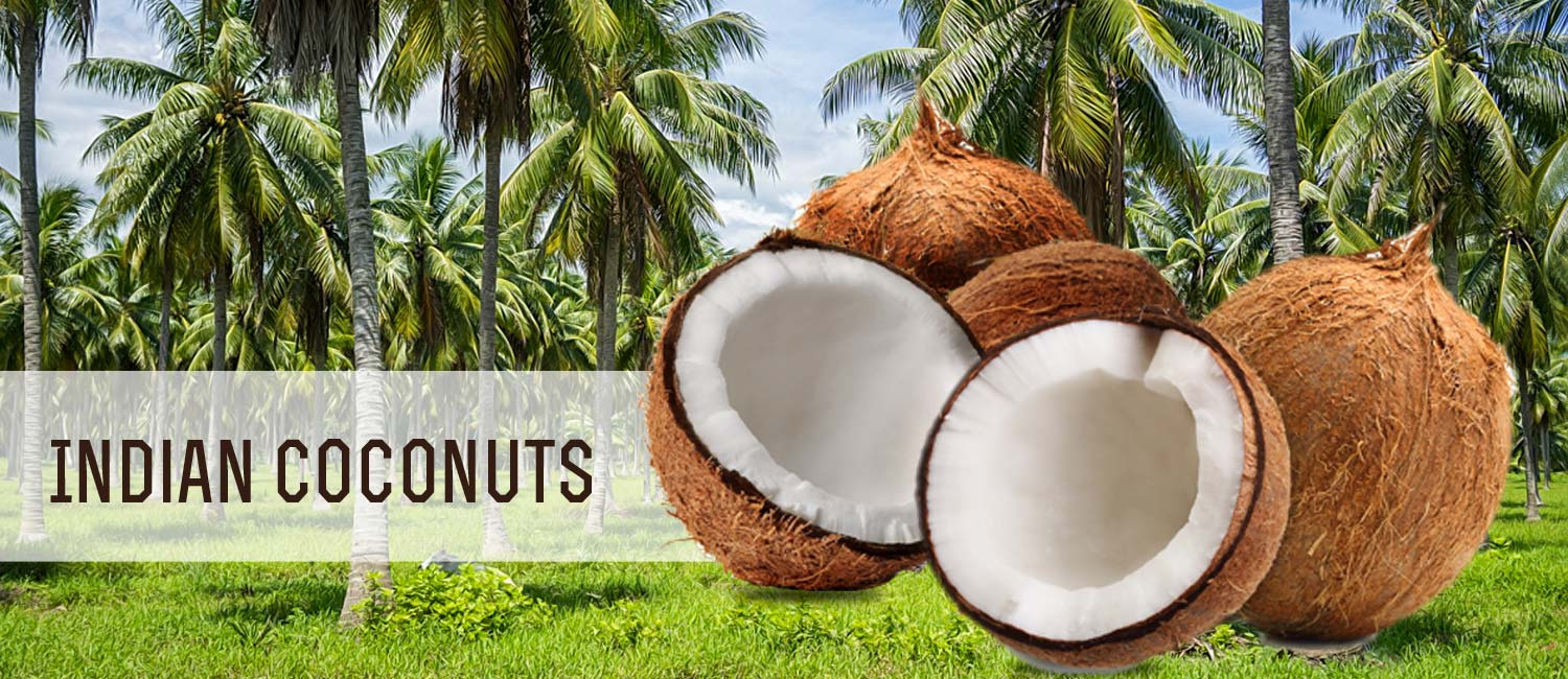 indian-coconut