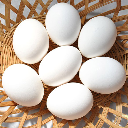 Buy Eggs Wholesale | Wholesale Egg Suppliers in India