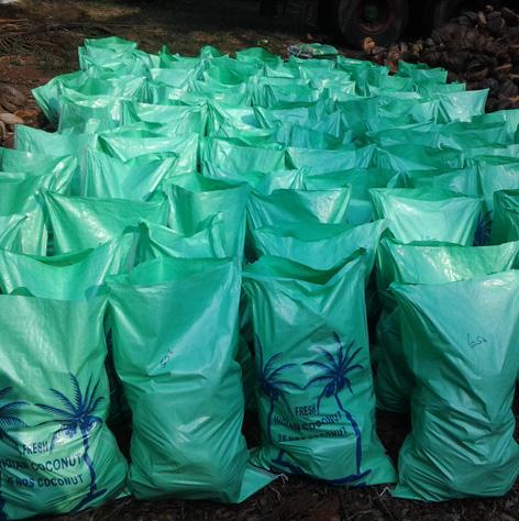 Geewin Exim - Coconut Wholesale Exporters & Suppliers in India
